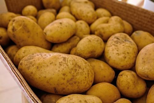 Ikego Hankensbüttel - Kartoffeln
