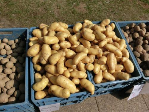 Ikego Hankensbüttel - Lagerung von Kartoffeln