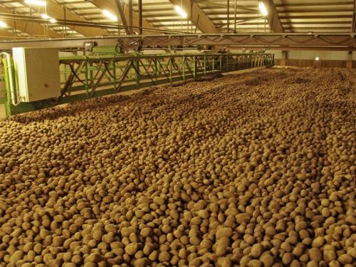 Ikego Hankensbüttel - Kartoffellager